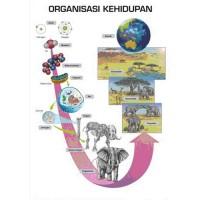 Organisasi_kehidupan.jpg