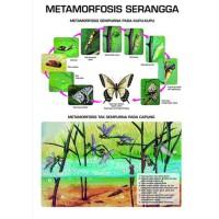 metamorfosis_serangga.jpg
