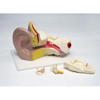model_telinga_dari_plastik.jpg